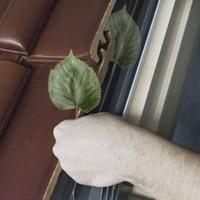 czyszczenie z liści